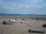 Tywyn-Aberdyfi Beach Walk